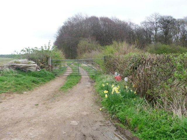Gated track into Lund Wood