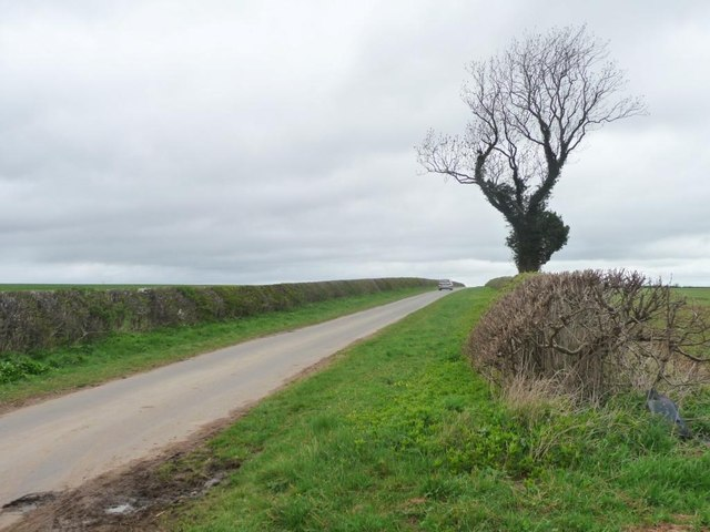 Lone tree on Jewitt Lane