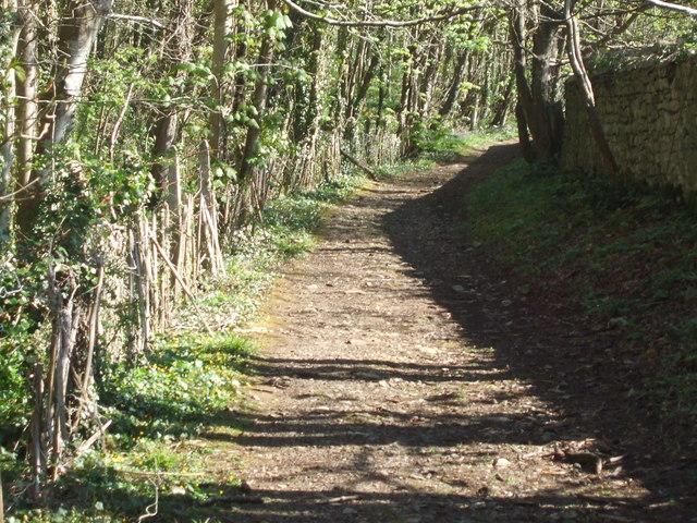 Pant y Slade woodland track