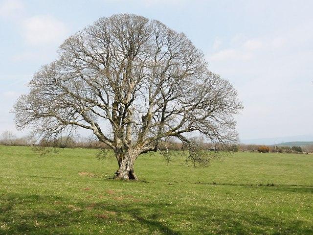 bare tree 169 tony atkin geograph britain and ireland