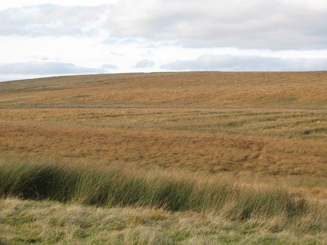 Wain Rigg south of Eadleystone