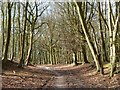 SU7497 : Woodland, Aston Rowant by Andrew Smith