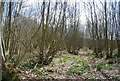 TQ5655 : Coppicing, Hanger Wood by Nigel Chadwick