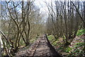 TQ5655 : Footpath, Hanger Wood by Nigel Chadwick