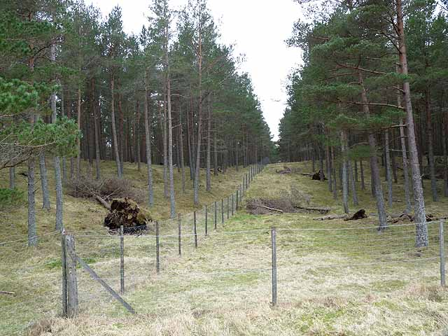 Internal fence and firebreak in Drums Plantation