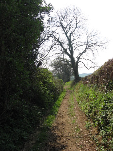 Old lane near Waytown