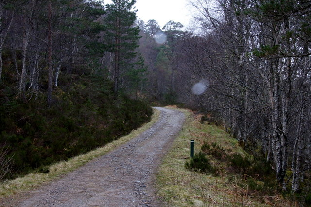 Track to the viewpoint above Dog Falls carpark, Glen Affric