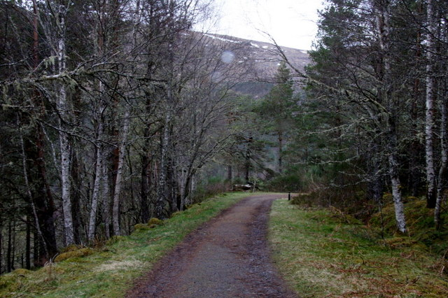 Track above the Dog Falls carpark, Glen Affric