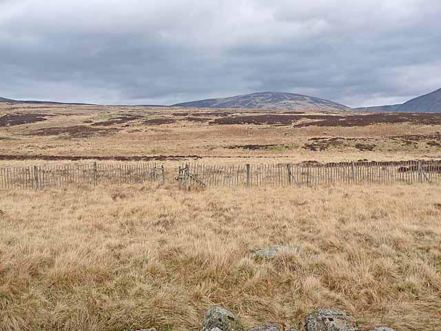 Hillside at Wheen