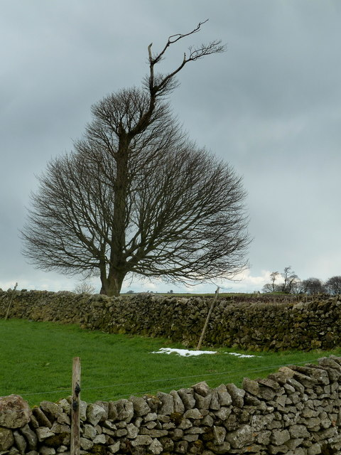 Field corner and tree, Griffe Grange