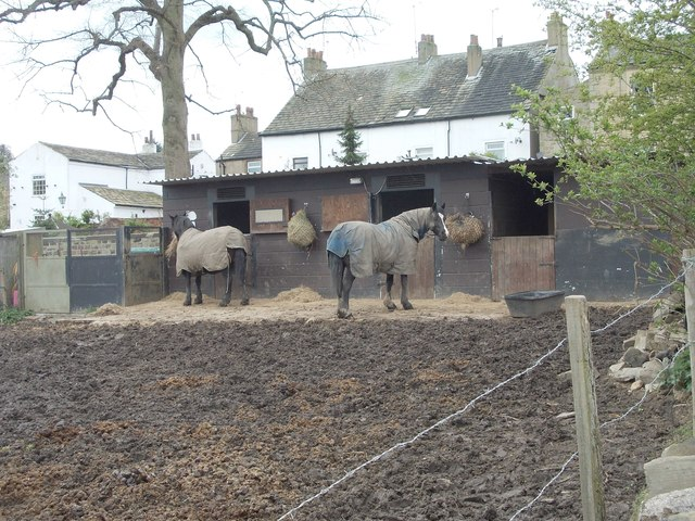 Horses grazing - Church Lane
