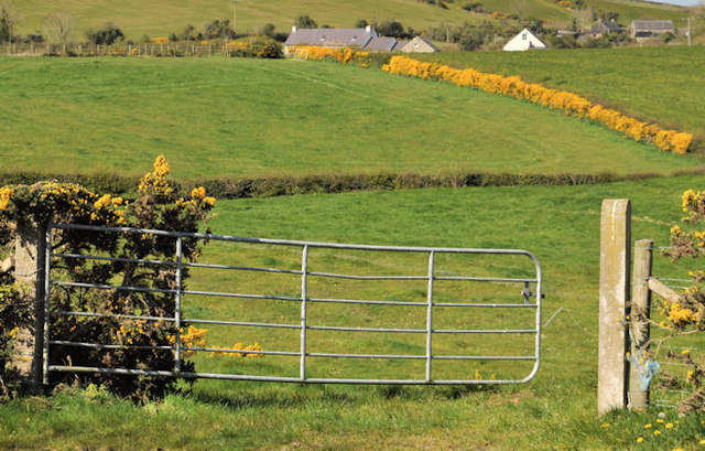 Gate near Saintfield