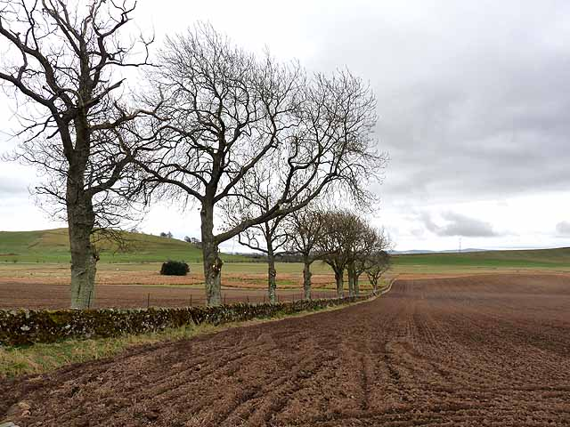 Ploughed field and line of trees, Aucharroch Cottage