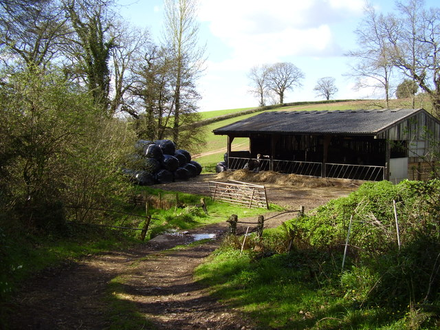 Barn, cattle and silage bails at Cawley's farm