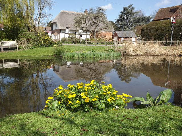 Upton Grey Village Pond