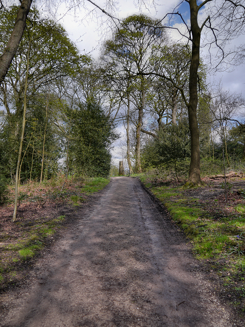 Gawthorpe Hall Plantation