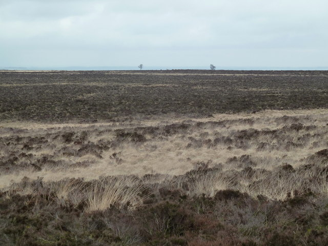 Big Moor and two little trees