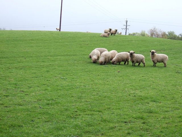 Grazing land near Cundall
