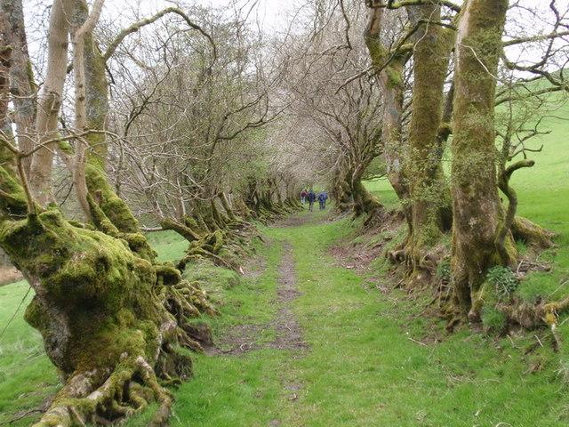 Hen heol Geufron old road, Llanwrtyd