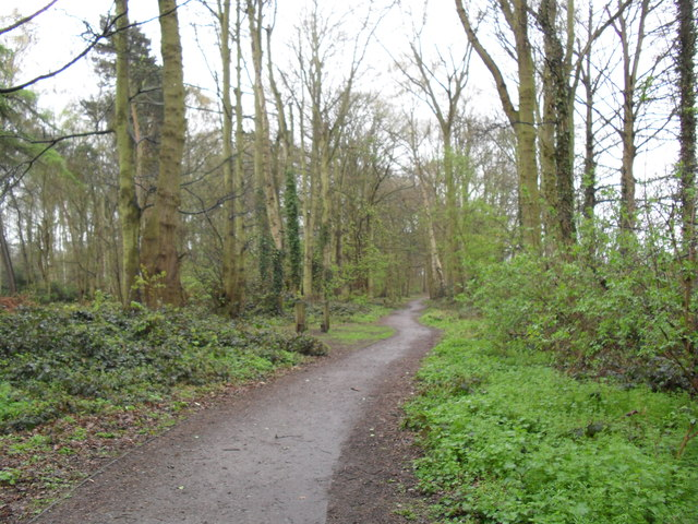 Lings Wood