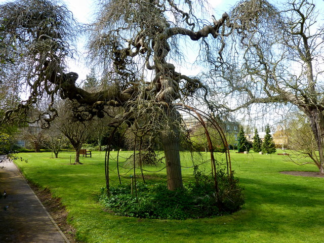 A tree in quex park birchington pam fray geograph for Quax parc
