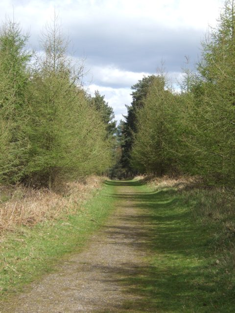 Forestry track at Broadhurst Green