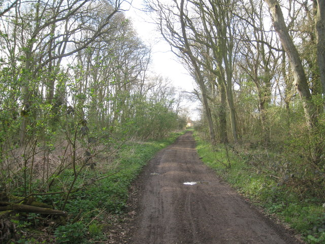 The Viking Way through Shipman's Plantation