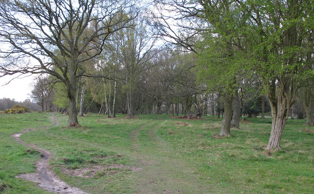 Hertfordshire Way, Berkhamsted Common