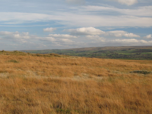 Hartleyburn Common (North Side) north of Kellah Burn