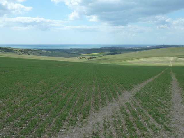 Looking south-ish over wheat field to Bostal Bottom