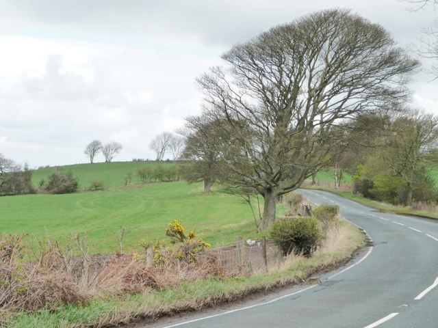 Tree at the bend, Lead Road