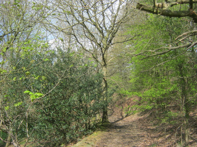 Woodland footpath along Birk Bank