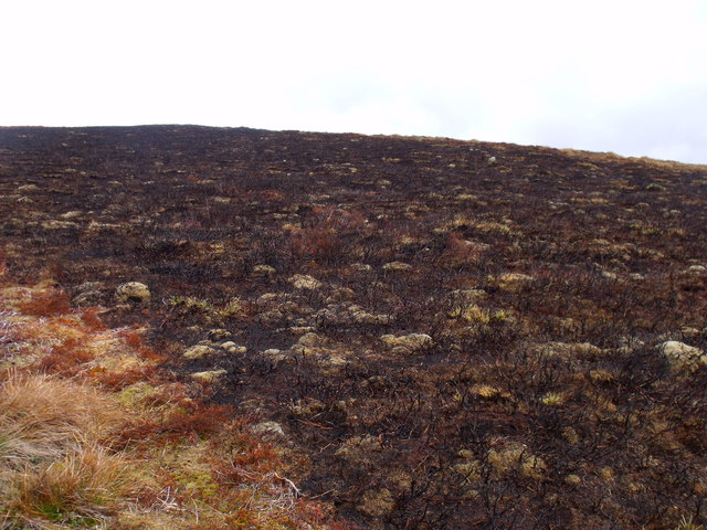 Freshly burnt heather south of Mount Sned