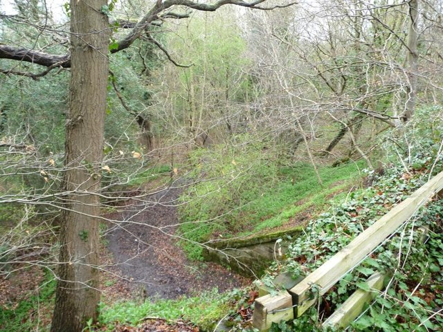 Track through Priestfield Wood