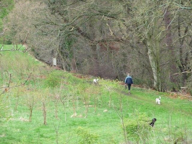 Walking the dogs, Pontburn Woods