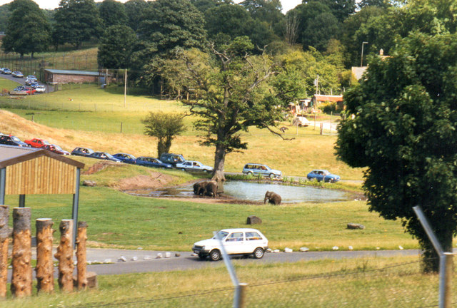 West Midlands Safari Park 1998