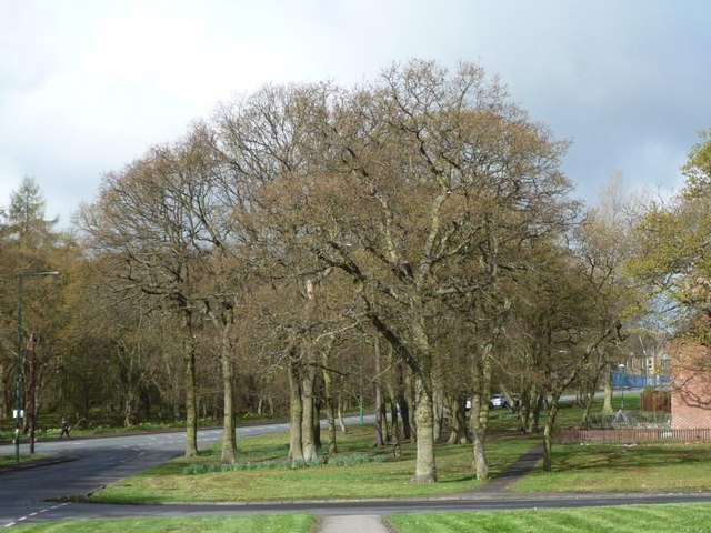 Stand of trees, Tanfield Lea
