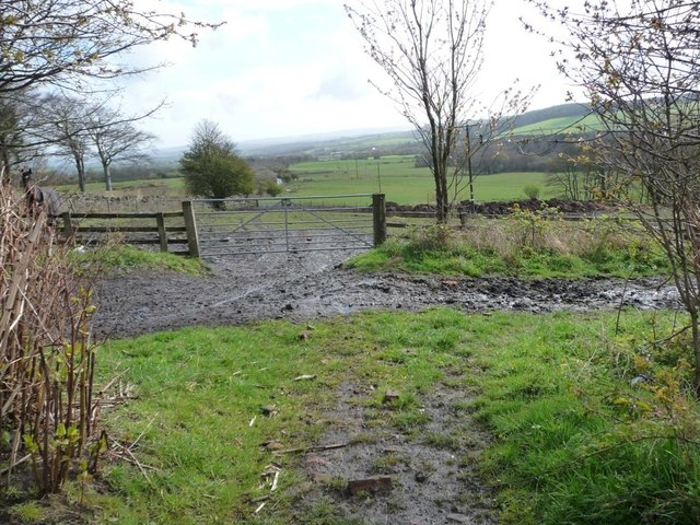 Muddy bridleway, south of Holmside Lane