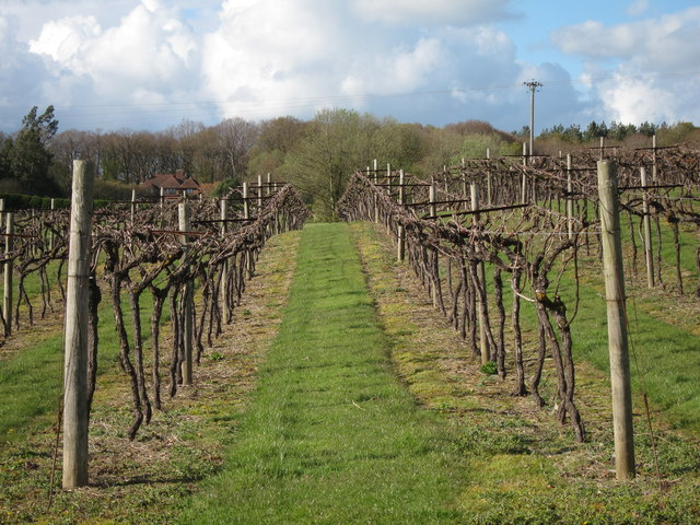 Biddenden vineyard