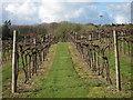 TQ8436 : Biddenden vineyard by Oast House Archive