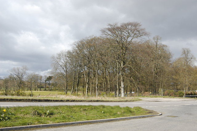 Copse by the A947 with storm brewing