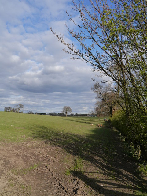 Drumcross Farmland In Spring