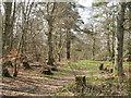 SU9693 : Hodgemoor Woods, Buckinghamshire by Peter S