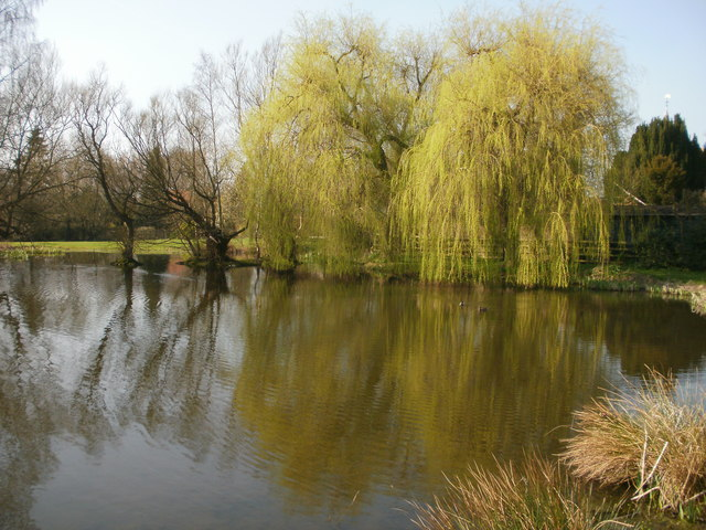 Weeping willows by the duck pond at Coleshill, Buckinghamshire