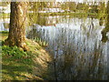 SU9495 : Reflections at Coleshill duck pond by Peter S