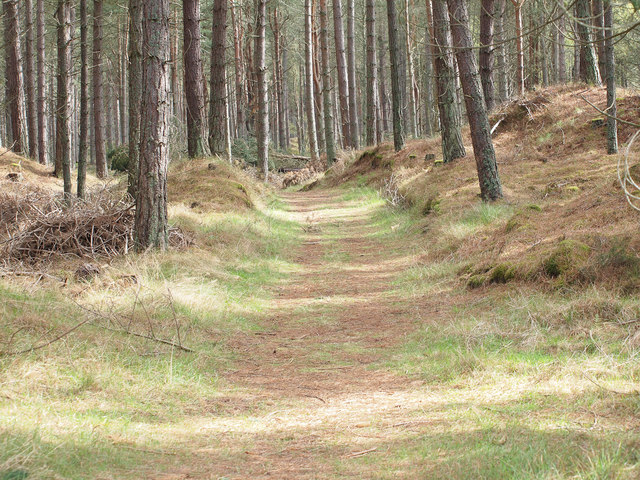 Track into Tentsmuir Forest