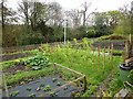 NY9363 : Allotments, Dipton Mill Road by Oliver Dixon