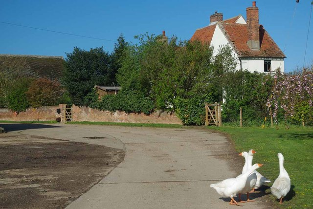 Guard Geese & Upper Hill Farm
