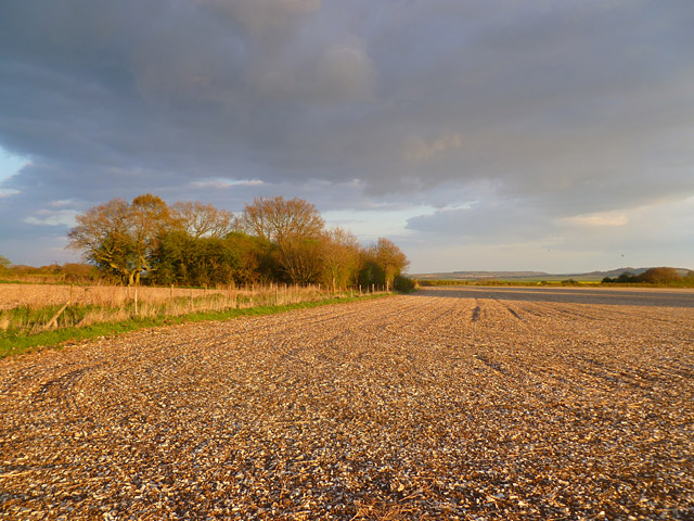 Farmland, Collingbourne Kingston