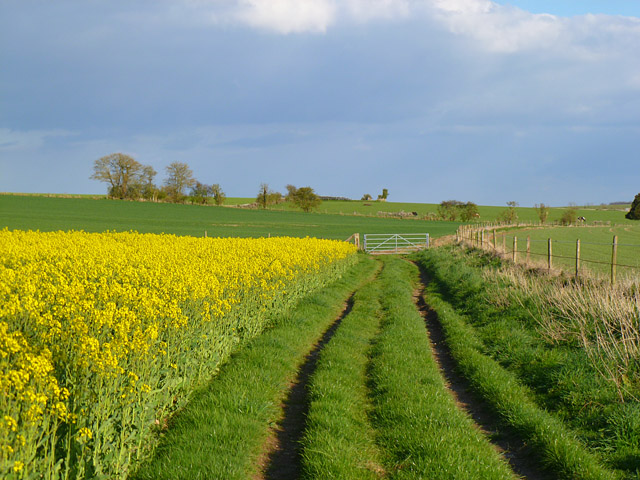 Track and farmland, Collingbourne Kingston